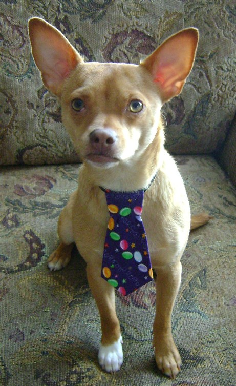 Buster_and_his_Easter_Egg_Tie.JPG