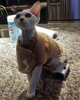 DevonRex_cat_coat_5068.png