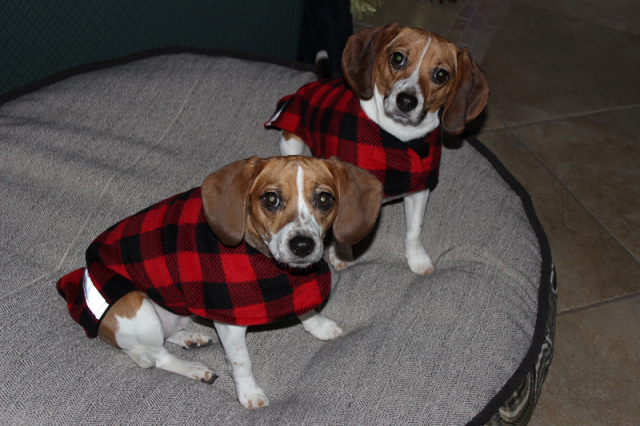 beagles_fleece.png
