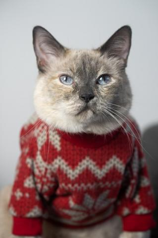 cat_xmas_sweater.jpg