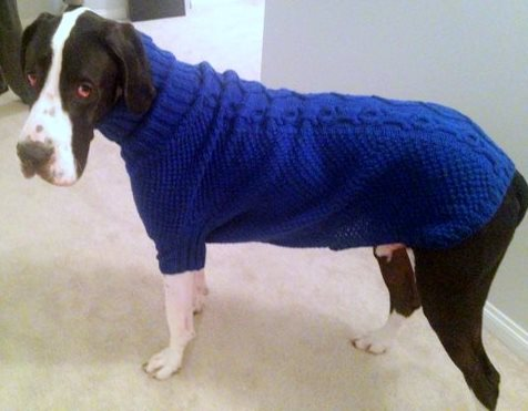 dane_sweater2.jpg