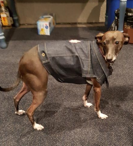 greyhound_jean_jacket.png