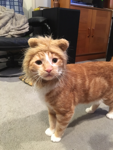 lion_cat.png